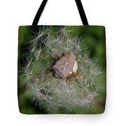 Stink Bug On Dandelion Seed Head Tote Bag