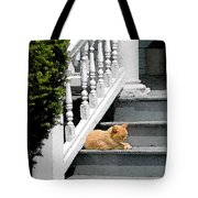 Stratford Cat Nap Tote Bag
