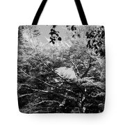 Streched Trees In Black And White Tote Bag