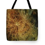 Striated Frogfish, North Sulawesi Tote Bag