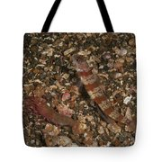 Striated Goby And Blind Shrimp, North Tote Bag