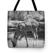Striped Deer In Black And White Tote Bag