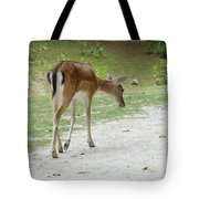 Strolling Through The Park Tote Bag