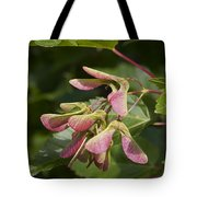 Sugar Maple Acer Saccharum Seed Pods Tote Bag
