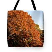 Sugar Maple Tote Bag