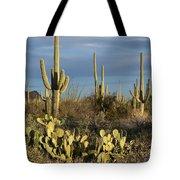 Suguaros At Sunset Tote Bag