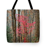 Sumac In Morning Light At Cumberland Falls State Park Tote Bag