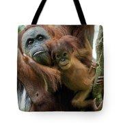 Sumatran Orangutan Pongo Abelii Mother Tote Bag