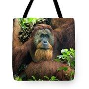 Sumatran Orangutan Pongo Abelii Tote Bag