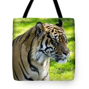 Sumatran Tiger Portrait  Tote Bag