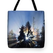 Sunburst Through Silhouetted Pine Trees Tote Bag