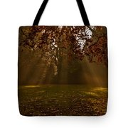 Sunlight And Leaves Tote Bag