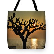 Sunlight And Tree Tote Bag