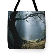 Sunlight Beams Through The Treetops Tote Bag