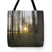 Sunlight In The Forest Tote Bag