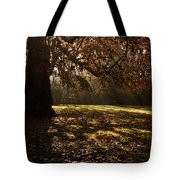 Sunlight In Trees Tote Bag