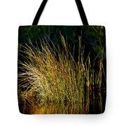 Sunlight On Grass Merritt Island Nwr Tote Bag