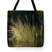 Sunlight On Grass Original Tote Bag