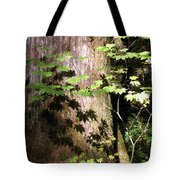 Sunlight Reaching The Forest Floor Tote Bag