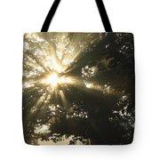 Sunlight Through Tree Cahir, County Tote Bag