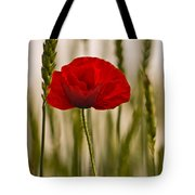 Sunset Glow. Tote Bag