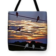 Sunsets And Birds Tote Bag