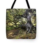 Sunstar Oak Tote Bag