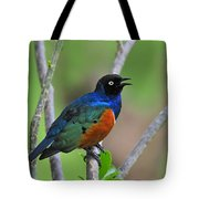 Superb Starling Tote Bag