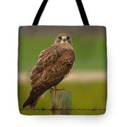 Swainsons Hawk Tote Bag