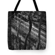 Swamp At Sunset Tote Bag