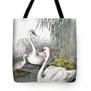 Swans, C1850 Tote Bag