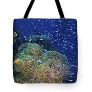 Swarms Of Small Baitfish Swim Tote Bag