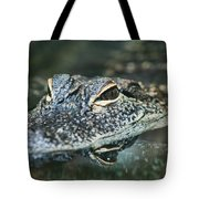 Sweet Baby Alligator Tote Bag