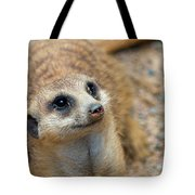 Sweet Meerkat Face Tote Bag