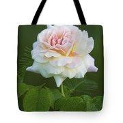 Sweet Morning Peace Rose Tote Bag