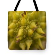 Sycamore Seed Pod Tote Bag
