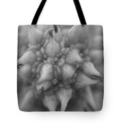 Sycamore Seed Pod In Black Tote Bag