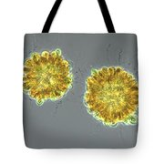 Synura Uvella Colonies, Lm Tote Bag