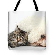 Tabby Kitten And Bichon Fris� Tote Bag