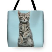 Tabby Kitten Sitting Up Tote Bag