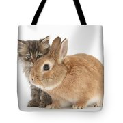 Tabby Kitten With Sandy Tote Bag