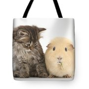 Tabby Kitten With Yellow Guinea Pig Tote Bag