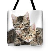 Tabby Kittens Cuddling Tote Bag