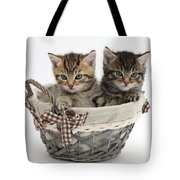 Tabby Kittens In A Basket Tote Bag