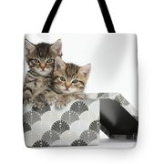 Tabby Kittens In Gift Box Tote Bag