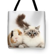 Tabby-point Birman Cat And Guinea Pig Tote Bag