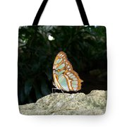 Tailed Jay Butterfly1 Tote Bag
