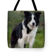 Taj - Border Collie Tote Bag by Michelle Wrighton