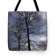 Tall Silhouetted Trees Tote Bag