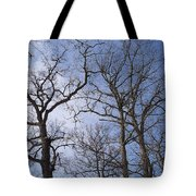 Tall Trees Reaching For A Blue Sky Tote Bag